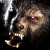the-wolfman-benicio-del-toro